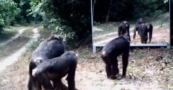 Was diese 3 Affen machen, als sie sich im Spiegel entdecken, musst Du sehen!