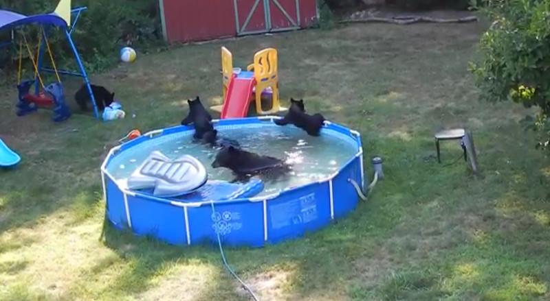 Bärenfamilie veranstaltet eine Poolparty im Garten