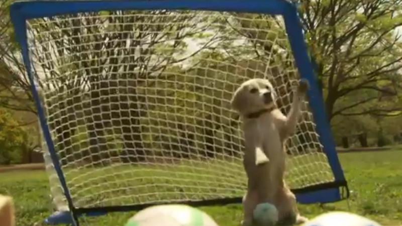 Dieser Hund ist ein besserer Torwart als Manuel Neuer