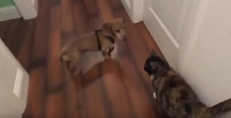 Dieser Hund liebt eine Katze – Leider ist ihre Reaktion nicht sehr nett!