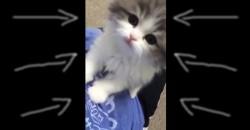 Dieses Kätzchen schafft es nur mit Mühe zu miauen!