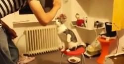 Du wirst nicht glauben, welchen Trick diese Katze kann!