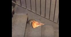 Diese kleine Ratte liebt Pizza und hat wohl zu oft Ratatouille angeschaut!