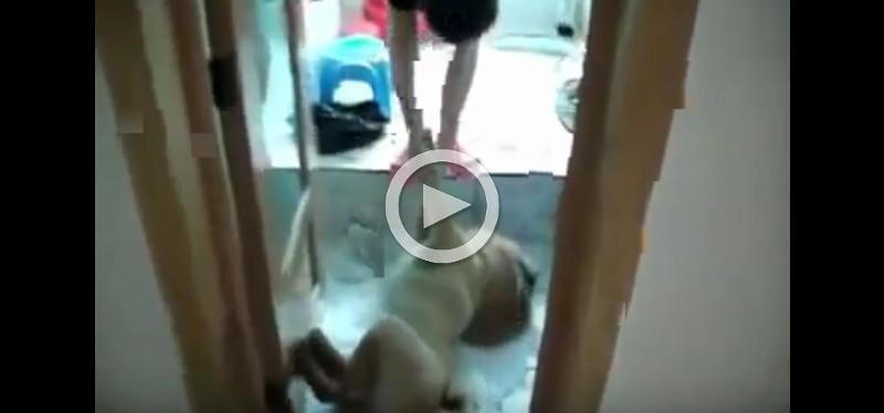 Dieser Hund stellt sich tot, weil er kein Bad nehmen will