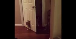 Ist diese Katze schlau oder dumm?