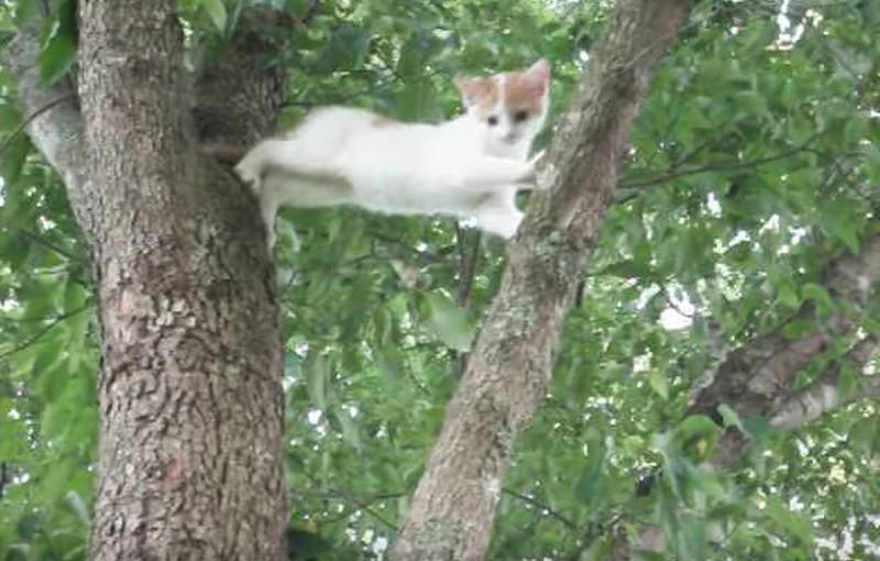 Da kann nur eine Katzenmama helfen!