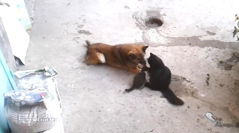 Diese Katzenmama stellt ihre Jungen einem alten Freund vor!