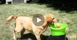 Dieser Hund freut sich unglaublich über seine Ballmaschine!