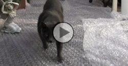 Was passiert, wenn Katzen auf eine Luftpolsterfolie tapsen?