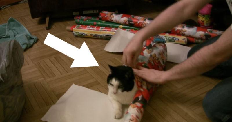 Wie man eine Katze als Weihnachtsgeschenk verpackt?