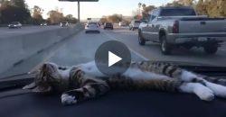 Und da heißt es immer, Katzen wären beim Autofahren nicht entspannt!