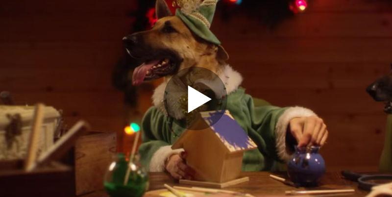 Diese Nikolaus-Gehilfen haben es echt drauf!