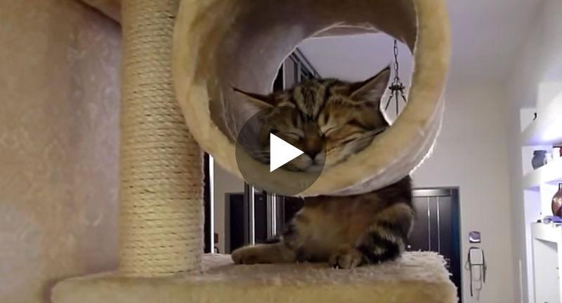 Katzen können in den unmöglichsten Positionen schlafen