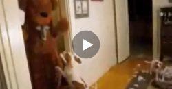 Diese Hunde bekommen einen besonderen Besuch