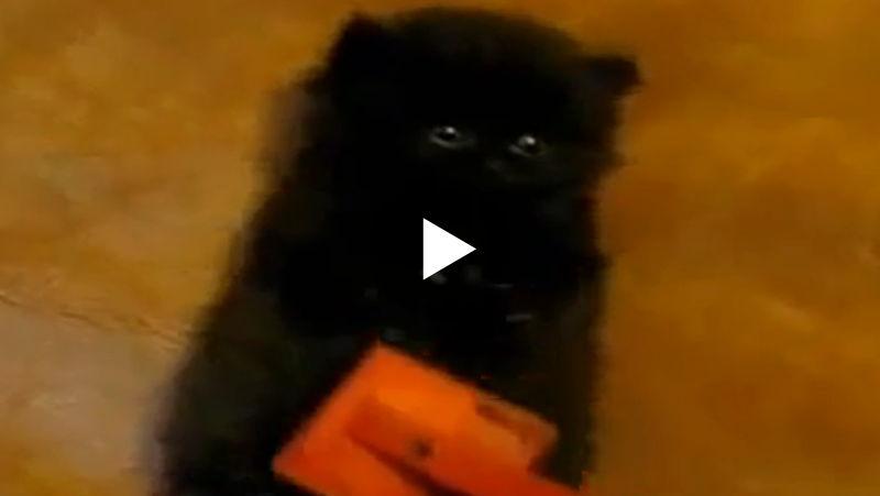 Was macht ein kleines Kätzchen, wenn es zur Fellpflege muss?