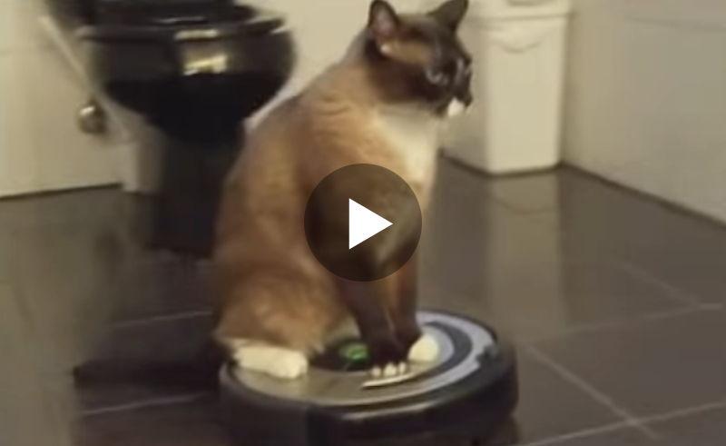 Diese Katze liebt ihren Saugroboter