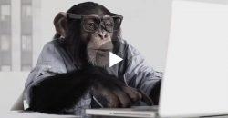 Verdient dieser verrückte Affe etwa Geld im Internet?
