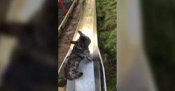 So lustig, wie dieser Hund die Kinderrutsche herunterrutscht
