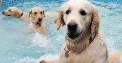 Diese Hunde veranstalten eine kleine Pool-Party