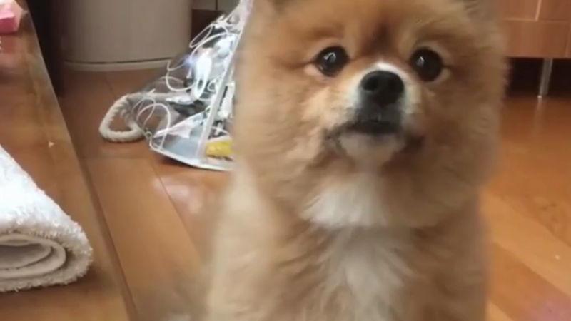 Dieser Hund kann ganz schön betteln