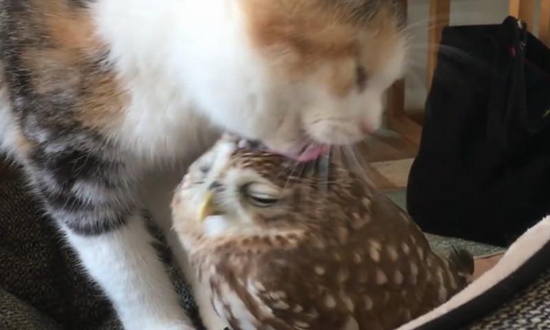 Katzen und Vögel können doch Freunde sein
