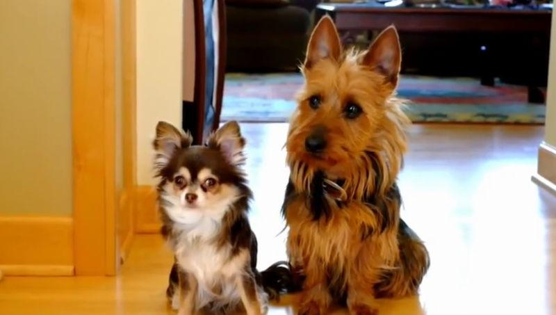 Welcher dieser beiden Hunde ist schuldig?
