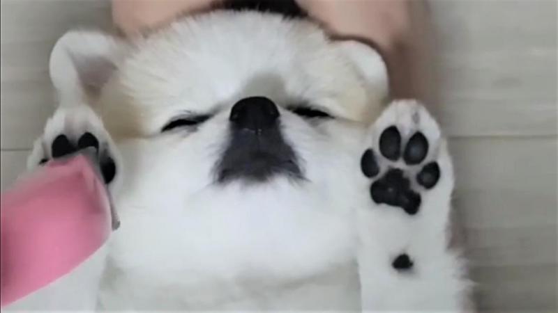 Dieser Hund chillt bei der Maniküre