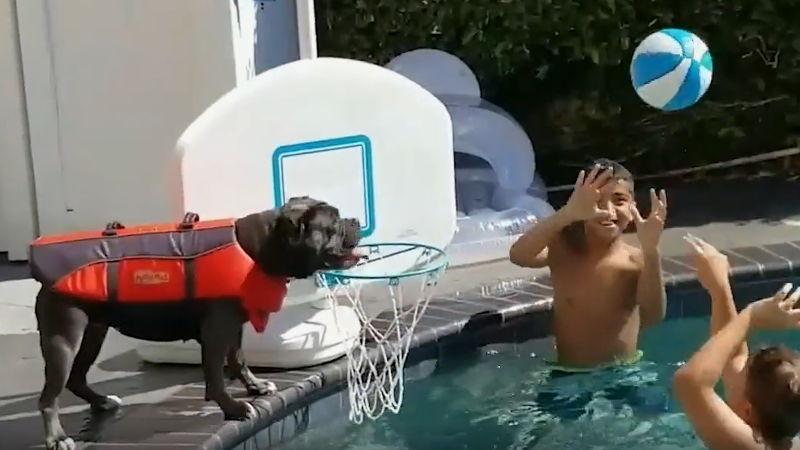 hund-pool-wasserball-basketball-spielen
