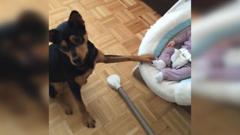 Dieser Hund schaukelt sanft die Wiege des Babys