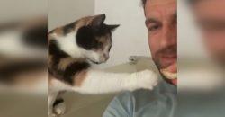 Diese Katze bettelt ganz schön hartnäckig, ob es sich lohnt?