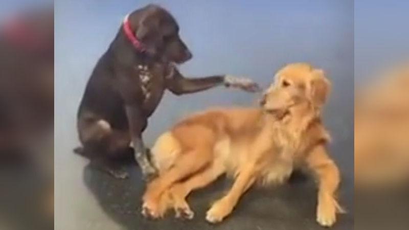 ruby-tiktok-hund-viral